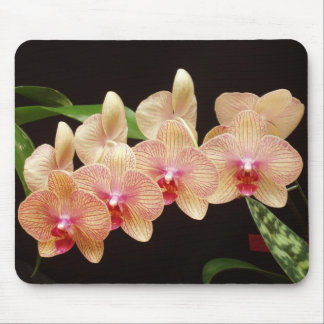 Orchids! Mouse Pad