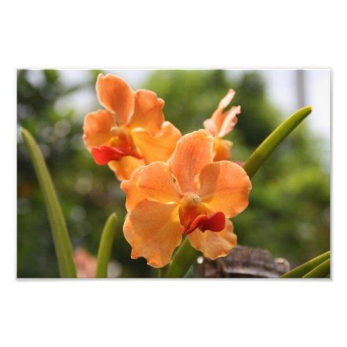 Orange orchids in a flower garden