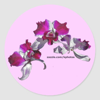 Orchids Pink Classic Round Sticker