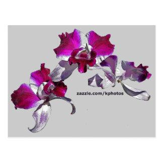 Orchids Pink - Kuyper Postcard