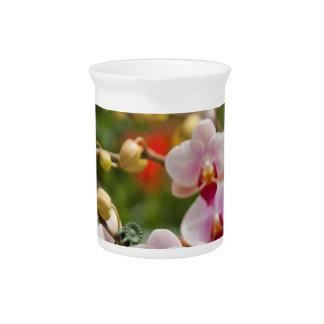 orchids pitchers