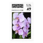 Orchids Postage Stamp