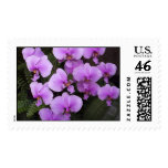 Orchids Postage Stamps