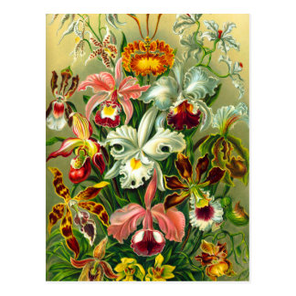 Orchids Postcards