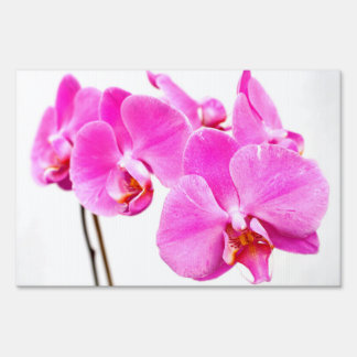 Orchids Sign