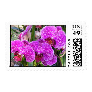 Orchids-Stamps