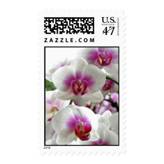 Orchids/ Wedding & All-Occasion Postage