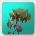 Orchids; Yellow and White. Beverage Coaster