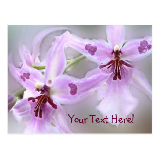 Orchids Your Text Here! Postcard