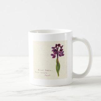 Orchis enano taza de café