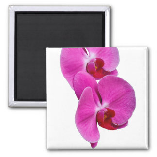 Orchis Magnet