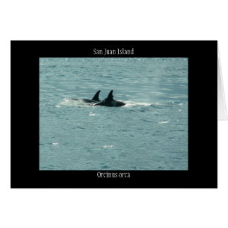 Orcinus orca greeting card