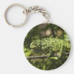 Ordinary European Chameleon Stress Staining Key Chain
