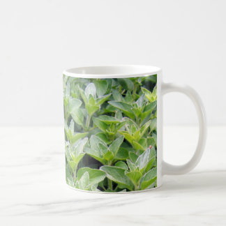 Orégano fragante taza de café