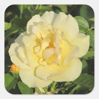 Oregold Yellow Rose Square Sticker