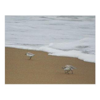 Oregon Beach & Sanderlings Postcard