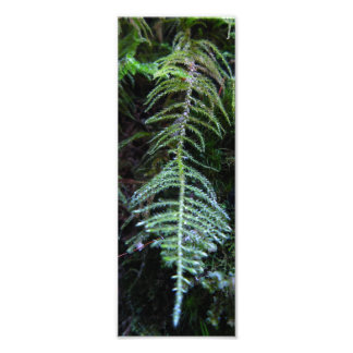 Oregon Beaked Moss Photo Print
