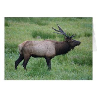 Oregon Bull Elk Greeting Card