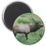 Oregon Bull Elk Magnet