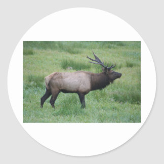 Oregon Bull Elk Classic Round Sticker