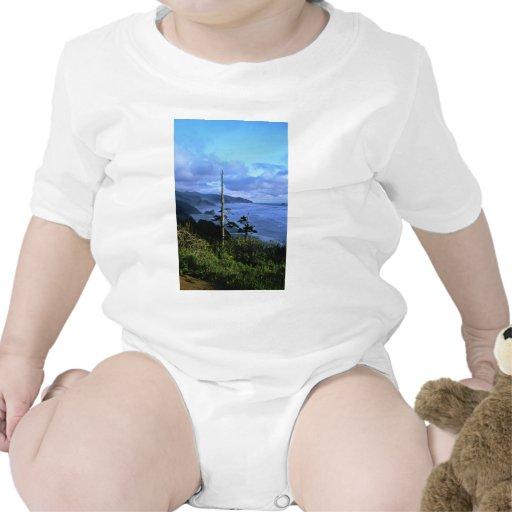 Oregon Coast Baby Creeper