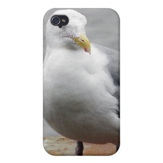 Oregon Coast Sea Gull iPhone 4 Case