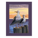 Oregon Coast Sea Gulls Postcard