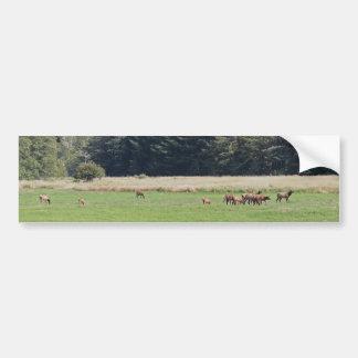 Oregon Cow & Calf Elk Car Bumper Sticker