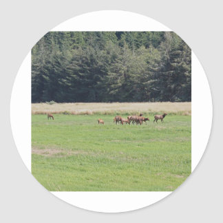 Oregon Cow Calf Elk Round Sticker