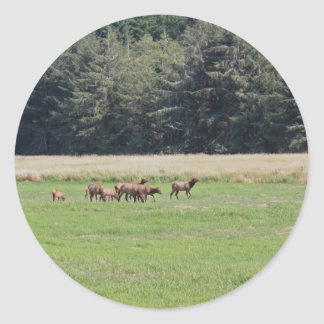 Oregon Cow Calf Elk Round Stickers