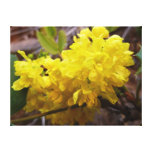 Oregon Grape Flowers Yellow Wildflowers Canvas Print