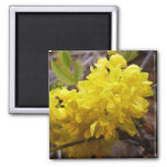Oregon Grape Flowers Yellow Wildflowers Magnet