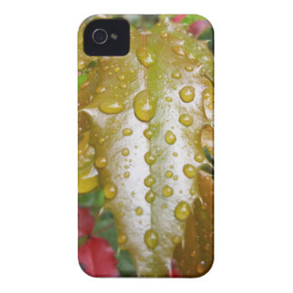 Oregon Grape With Water Drops iPhone 4 Case