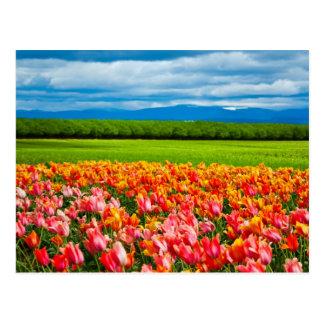 Oregon: Peach Tulip Field Postcard