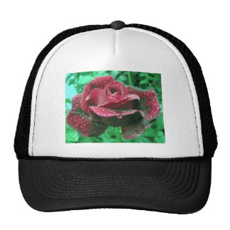 Oregon rose covered in raindrops trucker hat