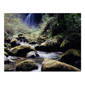 Oregon, Siskiyou National Forest, Elk Creek Postcard