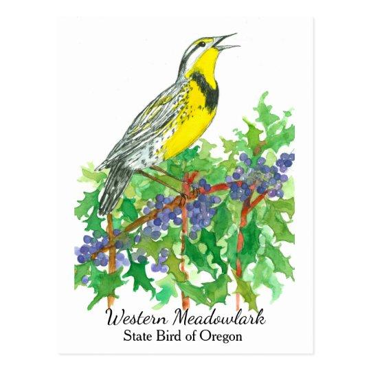 Oregon State Flower Bird Meadowlark Postcard