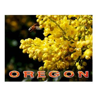 Oregon State Flower: Oregon Grape Postcard