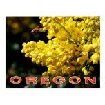 Oregon State Flower: Oregon Grape Postcards