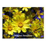 Oregon Sunshine Postcard