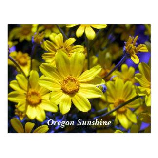 Oregon Sunshine Post Cards