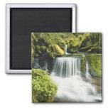 Oregon, Waterfall in Willamette national Refrigerator Magnet