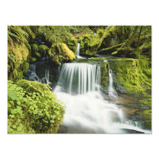 Oregon, Waterfall in Willamette national Photograph