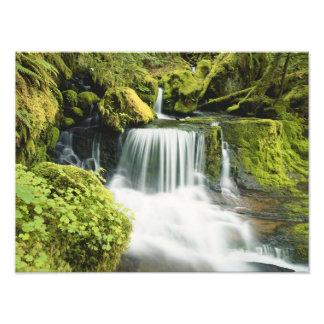 Oregon, Waterfall in Willamette national Photo Art
