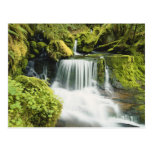 Oregon, Waterfall in Willamette national Post Cards