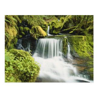 Oregon, Waterfall in Willamette national Postcard