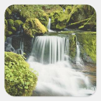 Oregon, Waterfall in Willamette national Square Sticker