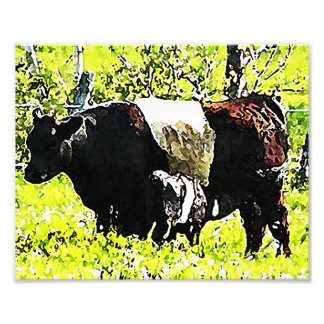 Oreo Cow and Calf in Maine Photo Print