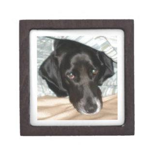 Oreo el perro del perro de aguas de saltador inglé caja de recuerdo de calidad