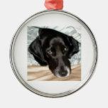 Oreo el perro del perro de aguas de saltador inglé ornamento de reyes magos